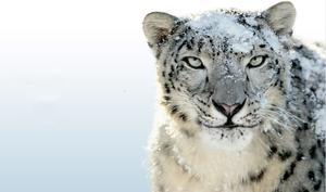 Warum Apple ein Update für Snow Leopard OS X 10.6 bereitstellt
