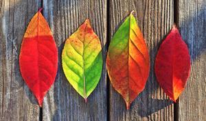 Das Herbst-Bundle von MacUpate hilft bares Geld sparen