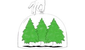 So bewirtschaftet Apple Wälder für mehr Nachhaltigkeit