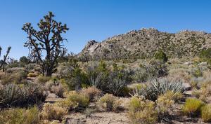 Wie wird macOS 10.14 heißen - Mojave, Sequoia, Ventura oder Sonoma?