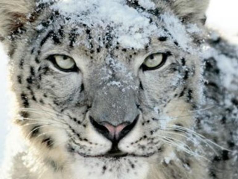Die Icons der OS-X-Leoparden: Kunstwerke