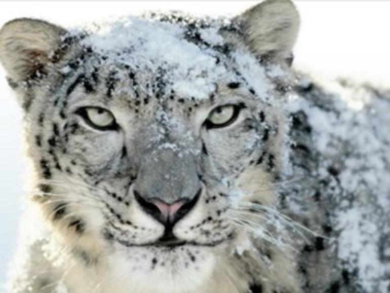 Aspyr wird Snow Leopard nicht mehr mit neuen Spielen und Patches unterstützen