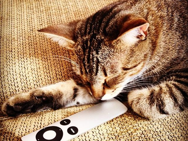 Die 33 flauschigsten Apple-Cats