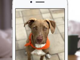 Porträt-Modus am iPhone 7 Plus: Apple gibt jetzt Praxis-Tipps