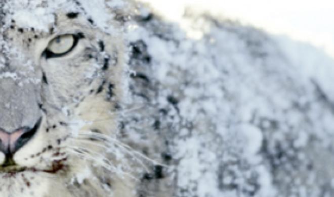 Snow Leopard kehrt in den Apple Store zurück