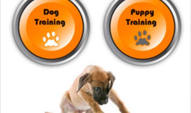 Hundetraining per iPhone-App