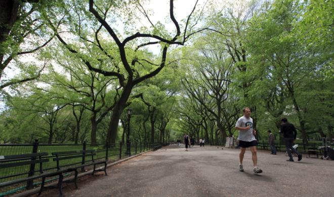 200 New Yorker Bäume bekommen E-Mail-Adressen