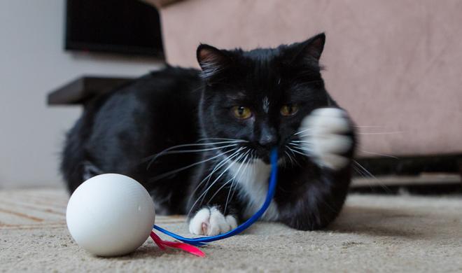 Gadgets für Katzen: Tierisch gut oder komplett überflüssig?