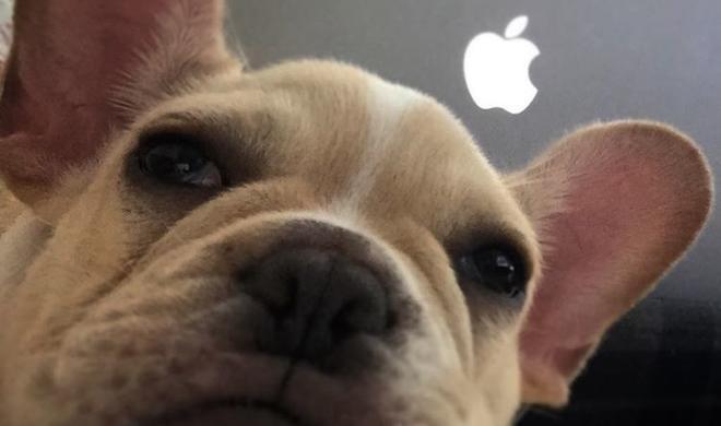 Hach, wie süß: Die 33 kuscheligsten Apple-Dogs