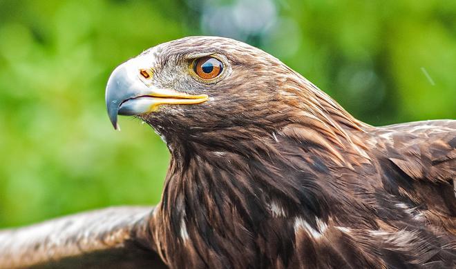 Adler gegen Drohne: Niederlande macht Nerdspielzeug den Garaus