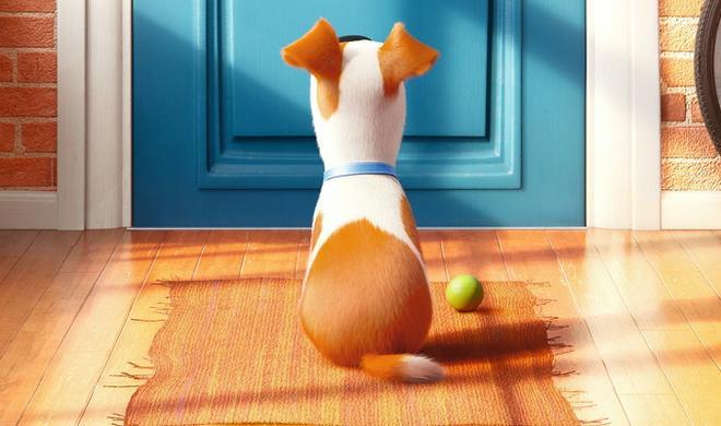 Von den Minion-Machern: Pets in 3D ab sofort im Kino
