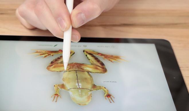 Die Mac-Life-Kolumne: Nur noch schnell den Frosch töten
