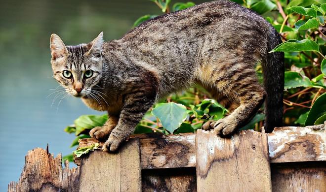 Miau: Die 11 besten Apps für Katzenliebhaber