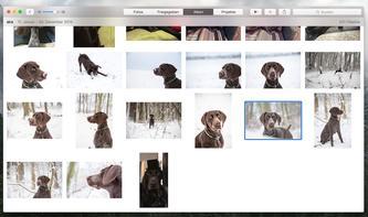 Schlagwörter: So finden Sie Ihre Fotos am Mac wieder