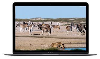 So leicht wechseln Sie das Hintergrundbild beim Login-Bildschirm am Mac