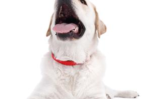 Für alle Felle: Zubehör für Hunde- und Katzenliebhaber